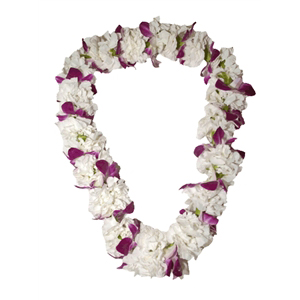 Carnation with Orchid Lei (Double)