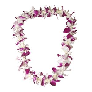 Orchid lei single purple white the hawaiian lei company orchid lei single purple amp white mightylinksfo